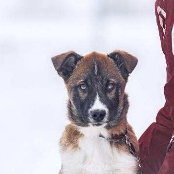 Винни - Собаки в добрые руки