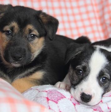 Дарси и Марио - Собаки в добрые руки