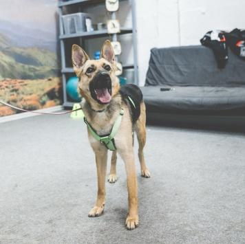 Руни - Собаки в добрые руки