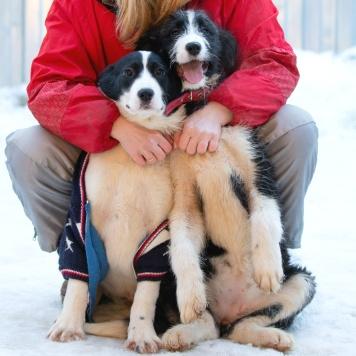 Вай Фай - Собаки в добрые руки