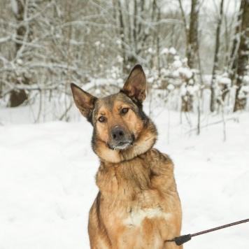 Румба - Собаки в добрые руки