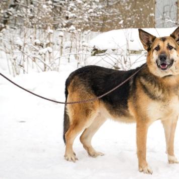 Лулу - Собаки в добрые руки