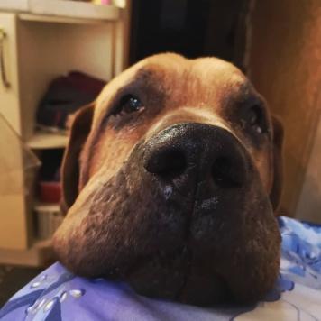 Рамзес - Собаки в добрые руки