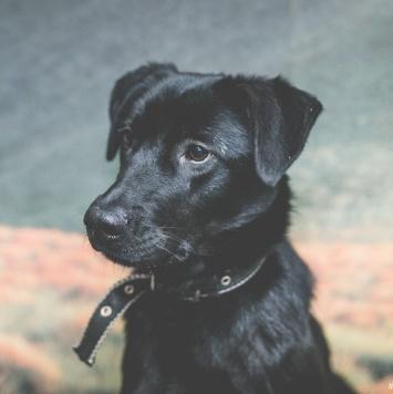 Бруклин - Собаки в добрые руки