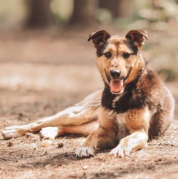 Синти - Собаки в добрые руки