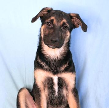 Брут - Собаки в добрые руки