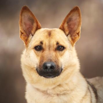 Дюшес - Собаки в добрые руки