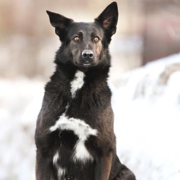 Танго - Собаки в добрые руки