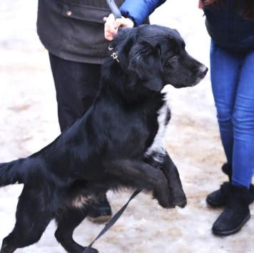 Пуаро - Собаки в добрые руки