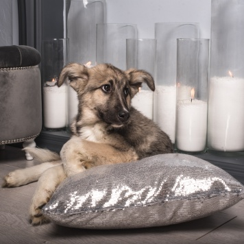 Батон - Собаки в добрые руки