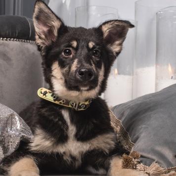 Багет - Собаки в добрые руки