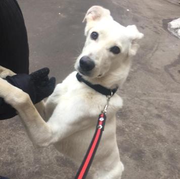 Гайка - Найденные собаки