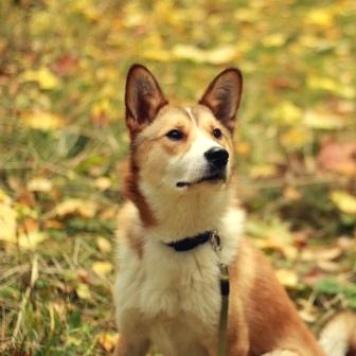 Рони - Собаки в добрые руки
