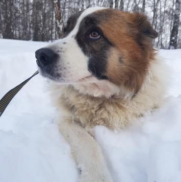 Бетховен - Найденные собаки