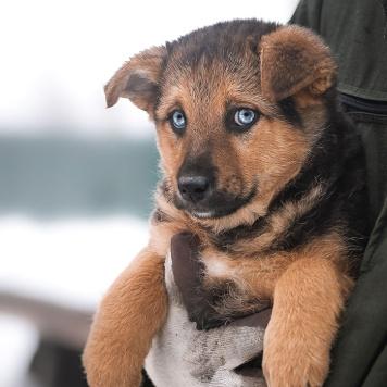 Мальвина - Собаки в добрые руки