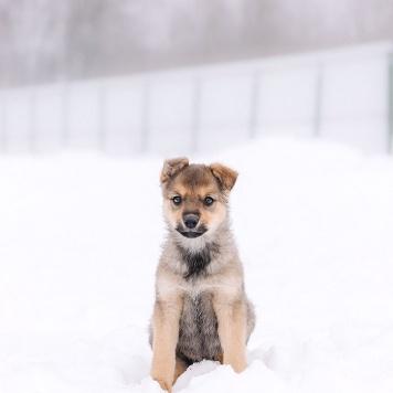 Емеля - Собаки в добрые руки