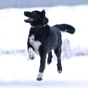 Рэмбо - Собаки в добрые руки