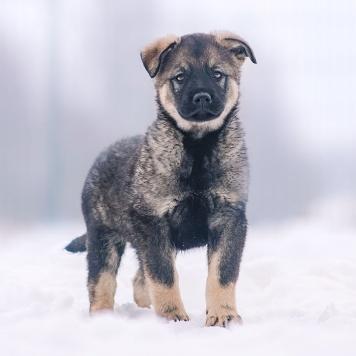 Щенооочки - Собаки в добрые руки