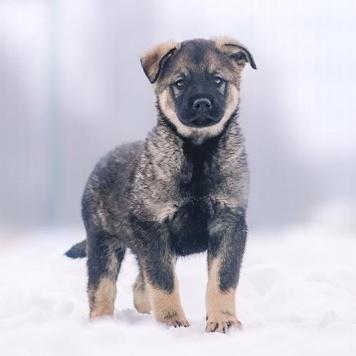 Щенульки - Собаки в добрые руки