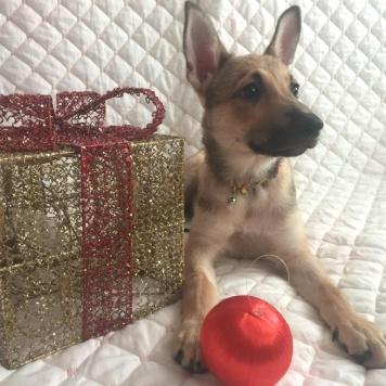 Чика - Собаки в добрые руки