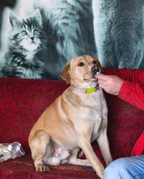 БобТейл - Собаки в добрые руки