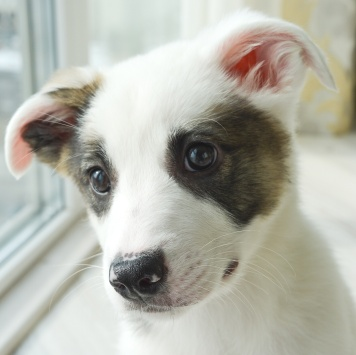 Ная - Собаки в добрые руки