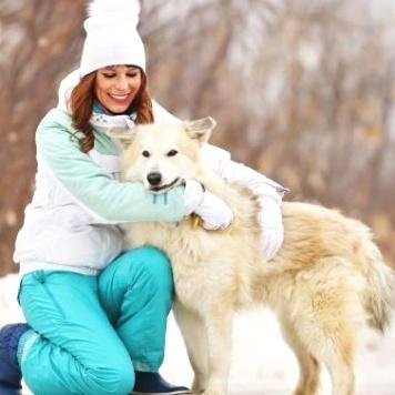 Арктик - Собаки в добрые руки