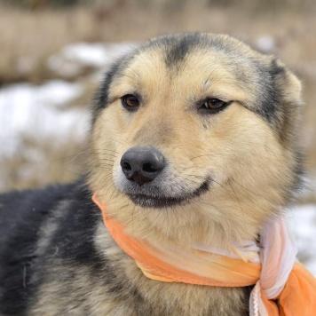 Зойка - Собаки в добрые руки