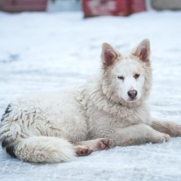Сема - Собаки в добрые руки