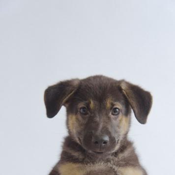 Бизи - Собаки в добрые руки