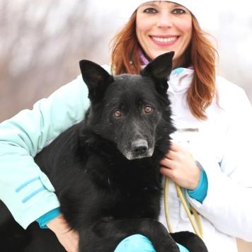 Пресли - Собаки в добрые руки