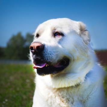 Сакар - Собаки в добрые руки