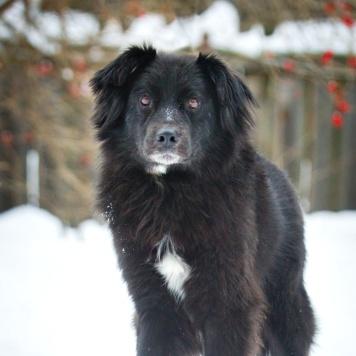 Черныш инвалид-трехлапик - Собаки в добрые руки