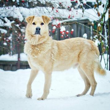 Кефир - Собаки в добрые руки