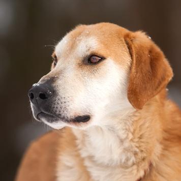 Гудвин - Собаки в добрые руки