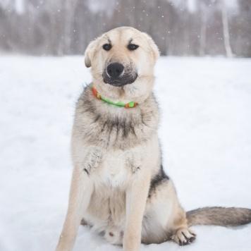 Рассел - Собаки в добрые руки