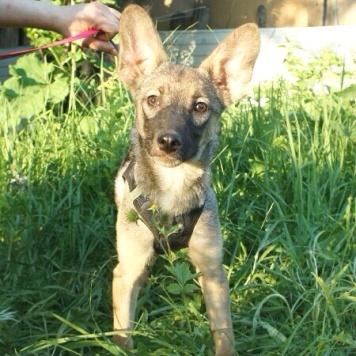 Ривьера - Собаки в добрые руки