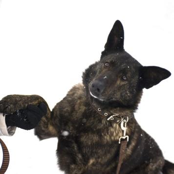 Тая - Собаки в добрые руки