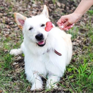 Гай - Собаки в добрые руки