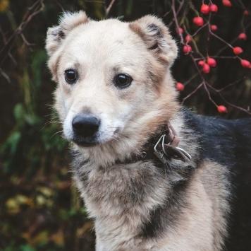 Пёс Малыш - Собаки в добрые руки