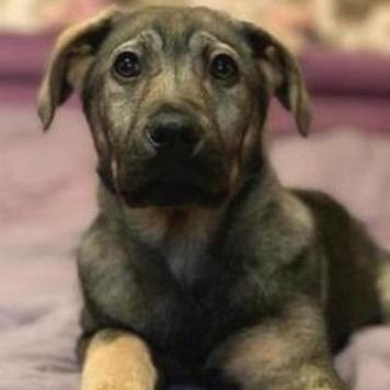 Плюшевый щенок - Собаки в добрые руки