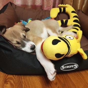 Банзай - Собаки в добрые руки