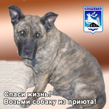 Стэлла - Собаки в добрые руки