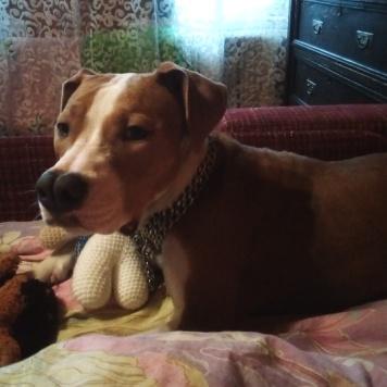 Ritta - Найденные собаки