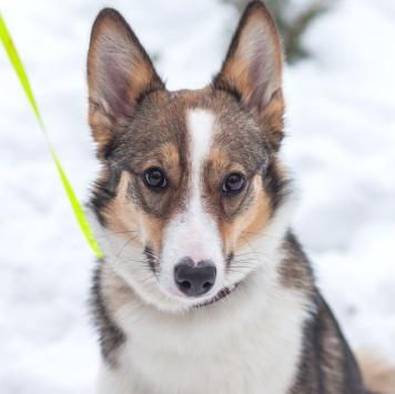 Айна - Собаки в добрые руки