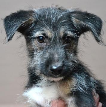 Мини Купер - Собаки в добрые руки