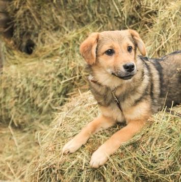 Тутси - Собаки в добрые руки