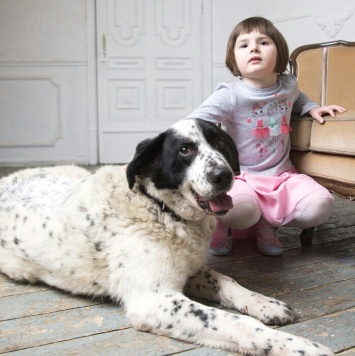 Герцог - Собаки в добрые руки