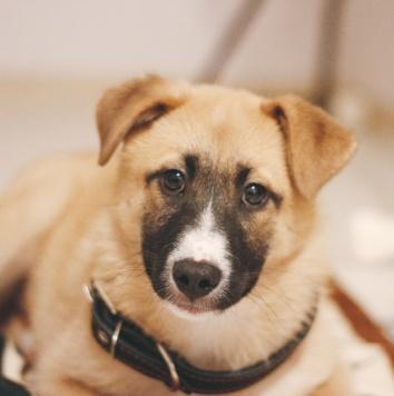 Миро - Собаки в добрые руки