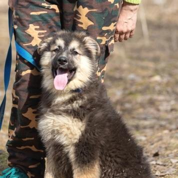 Эльбрус - Собаки в добрые руки